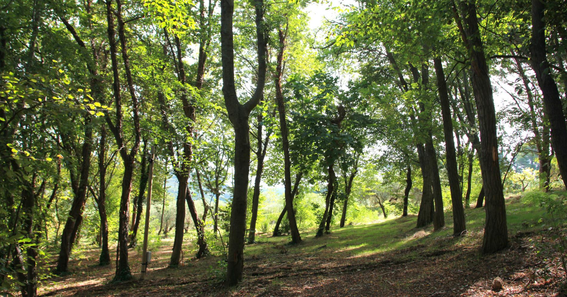 Il bosco di Poggio Imperiale Country House nelle Marche